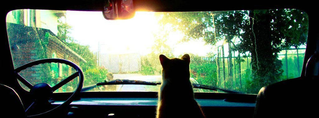 Cat in Car facebook Cover