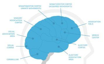 memorado brain areas of cognitive research techgyo