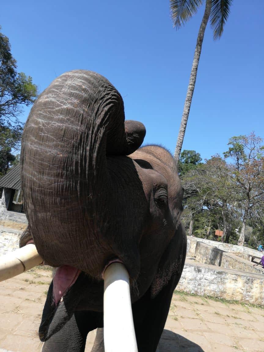 back camera elephant image